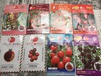 ミニトマト植えました(*^。^*)